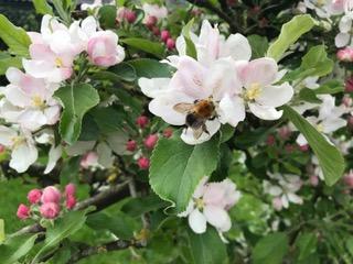 Fleur d arbres importante pour les abeilles